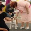 08.10.2009 Mitteleuropa Hundeausstellung