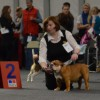 Tartu International Dog Show 03.11.12
